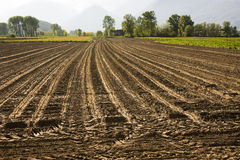 Cultivated field. With traces of processing Royalty Free Stock Image