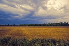 Cultivated field in autumn. Cultivated field and cloudy sky in autumn royalty free stock photography