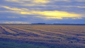 Cultivated field in autumn. Cultivated field and cloudy sky in autumn stock photography