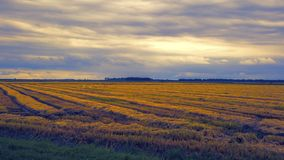 Cultivated field in autumn. Cultivated field and cloudy sky in autumn stock image
