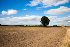 Cultivated field Royalty Free Stock Photography