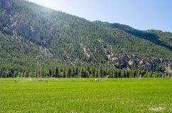 Cultivated Field in the Countryside of Bitish Columbia in Summer. Irrigation Systam in a Cultivated Field at the Foot ofForested Mountains on a Clear Summer Day Royalty Free Stock Photo
