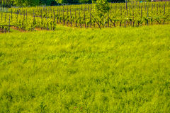Cultivated field Royalty Free Stock Images