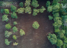 Cultivated field in farm. Above view from drone. Agriculture plantation background Stock Photography