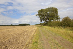 Cultivated field and farm track Stock Images
