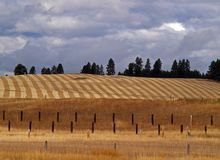 Cultivated Field - Fence Posts Royalty Free Stock Photos