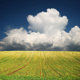 Cultivated field with green rows and greater white cloud Stock Image