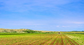 Cultivated Field in the Netherlands Royalty Free Stock Photography
