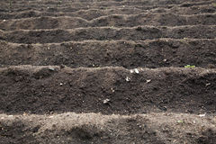 Cultivated field ready for planting and sowing Royalty Free Stock Photos