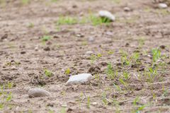 Cultivated field with rocks Stock Photos