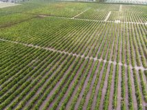 Wide view of a cultivated field. Cultivated field seen from above royalty free stock photography