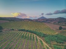 Wide view of a cultivated field. Cultivated field seen from above stock photos