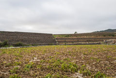Cultivated field. Tenerife, Canary Islands, Spain - landscape - cultivated field - hill - cloudy sky stock photos