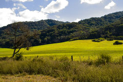 Cultivated field in valley Stock Image