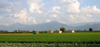 Cultivated fields. These fields are located in Abruzzo. People here produce fennel and corn, and all kinds of vegetables Stock Images