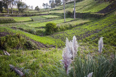 Cultivated fields in Chimborazo Stock Images