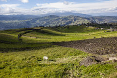 Cultivated fields in Chimborazo Stock Photos