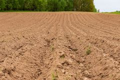 Cultivated fields in countryside with dark and wet soil for agriculture. Tractor made plotting furrows on the ground royalty free stock photography