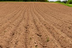 Cultivated fields in countryside with dark and wet soil for agriculture. Tractor made plotting furrows on the ground royalty free stock images