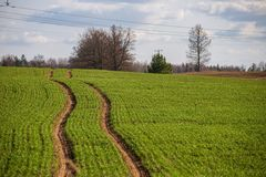 Cultivated fields in countryside with dark and wet soil for agriculture. Tractor made plotting furrows on the ground royalty free stock photos