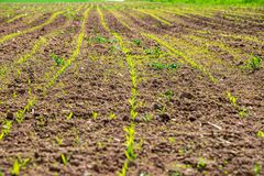 Cultivated fields in countryside with dark and wet soil for agriculture. Tractor made plotting furrows on the ground stock photos