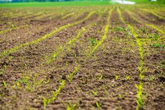 Cultivated fields in countryside with dark and wet soil for agriculture. Tractor made plotting furrows on the ground stock images