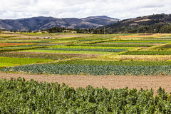 Cultivated fields royalty free stock images