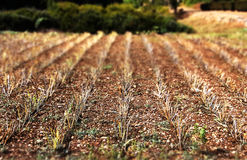 Cultivated fields Stock Photography