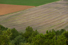 Cultivated Fields with Person Stock Photography