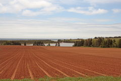 Cultivated fields of Prince Edward Island,Canada Royalty Free Stock Photography