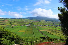 Cultivated fields on the rolling volcanic hills of Terceira. A vibrant landscape of cultivated fields on the Portuguese island of Terceira under an azure sky Royalty Free Stock Images