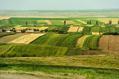 Cultivated fields during summer Stock Photo