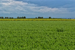 Cultivated fields Royalty Free Stock Image
