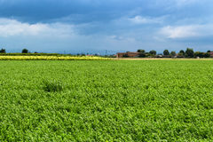 Cultivated fields Royalty Free Stock Photography