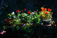 Cultivated flowers lit with the summer sun Stock Images