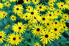 Cultivated flowers Royalty Free Stock Images