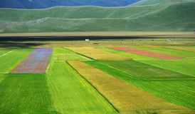 Cultivated and flowery fields of Castelluccio di Norcia. Karst plan with Sibillini mountains in background stock photography