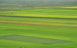 Cultivated and flowery fields of Castelluccio di Norcia stock photo