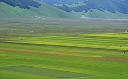 Cultivated and flowery fields of Castelluccio di Norcia. Karst plan with Sibillini mountains in background stock photos