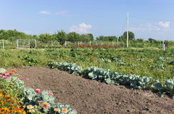 Cultivated garden, field with vegetables and flowers. Landscape Royalty Free Stock Photo