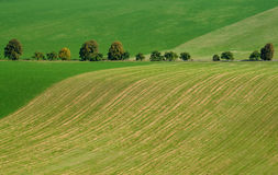 Cultivated green field Royalty Free Stock Image