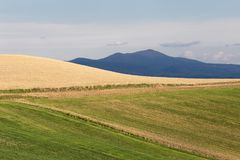 Cultivated green and yellow fields, with blue sky and mountains Stock Photos