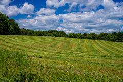 Cultivated hay, isanti county Stock Photos