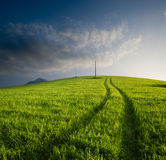 Cultivated hill at twilight Stock Images