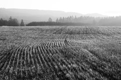 Cultivated Land Royalty Free Stock Photos
