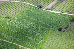 Cultivated land from above. Cultivated winery land from above royalty free stock photography