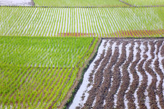 Cultivated land. Of Bangladesh rural area royalty free stock photo