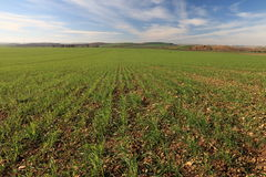 Cultivated land Royalty Free Stock Images