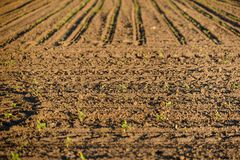 Cultivated land closeup Royalty Free Stock Photo