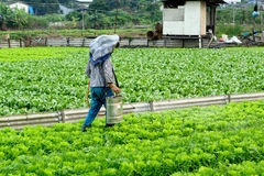 Cultivated land and farmer spraying. In hong kong stock images